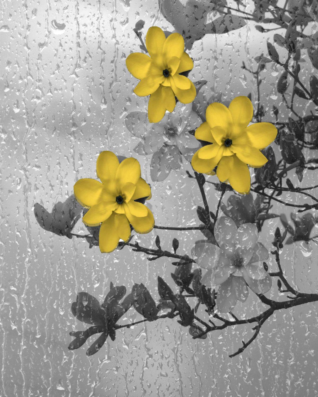 Yellow Gray Wall Art/Flowers/Tree Branch/Rain/Bathroom/Bedroom ...