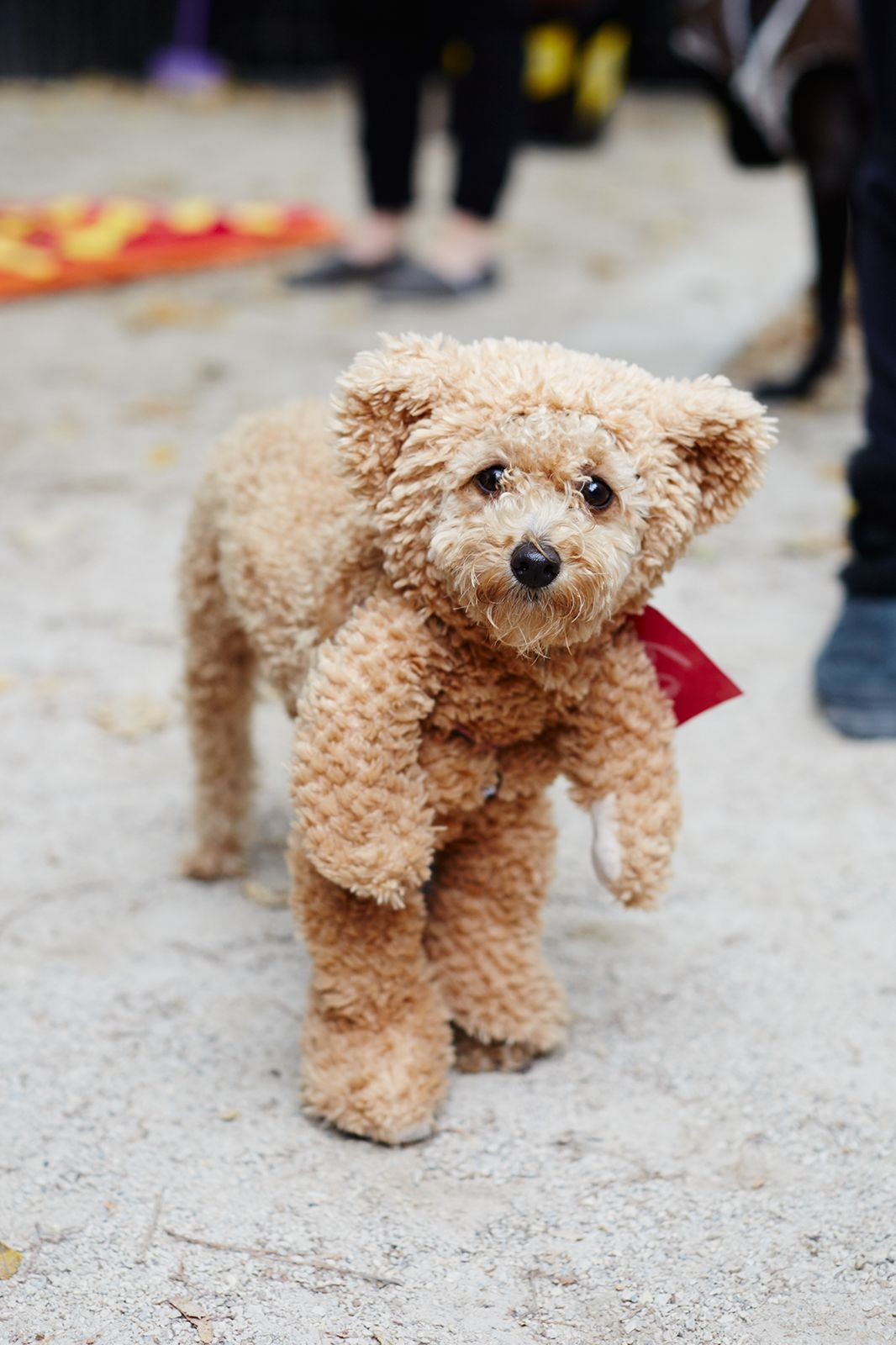 The 40+ Best Dog Costumes EVER  #refinery29  http://www.refinery29.com/2015/10/96371/new-york-dog-parade-pictures#slide-18  If you've already got button eyes, a teddy bear costume is a no-brainer....