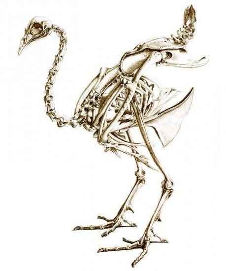 Esqueleto de un pavo real\'. Van Grouw ha elaborado cada ilustración ...