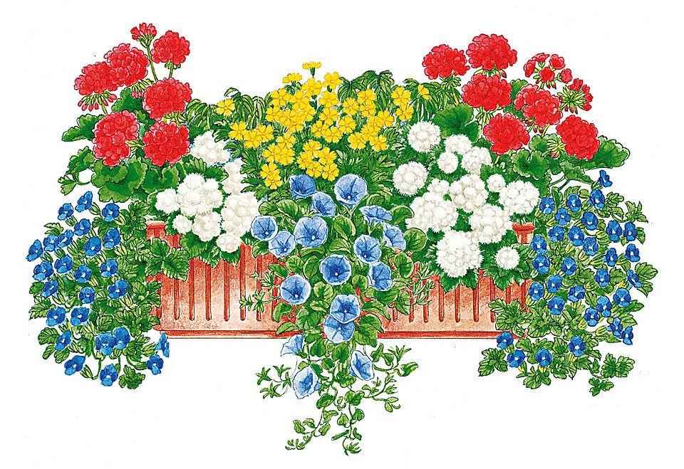 Balkonpflanzen-Set »Lebensfreude«,