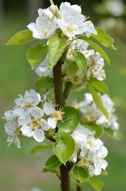 Pin Van Sherry Andrews Op White Flower Mix Prachtige Bloemen Lentebloesem Bloemenboom