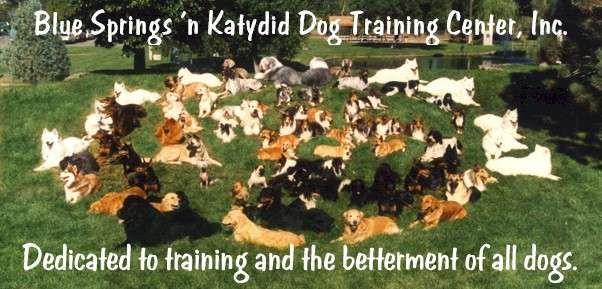 Dog Training Classes Puppy Training School Englewood Co Blue