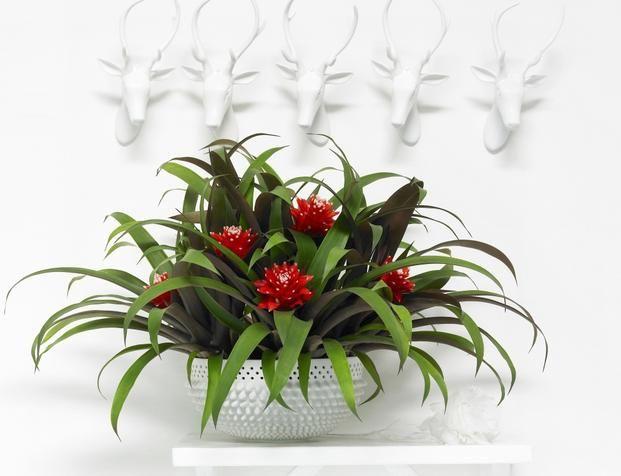 Kwiaty Doniczkowe Do Domu Galeria Zdjec Plants
