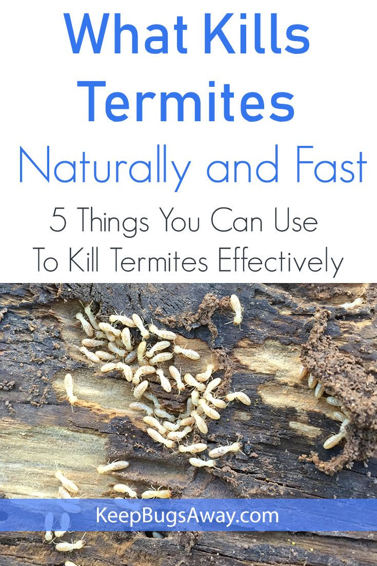 What Kills Termites Top 5 Things You Can Use To Kill Termites Termite Treatment Termites Diy Termite Treatment