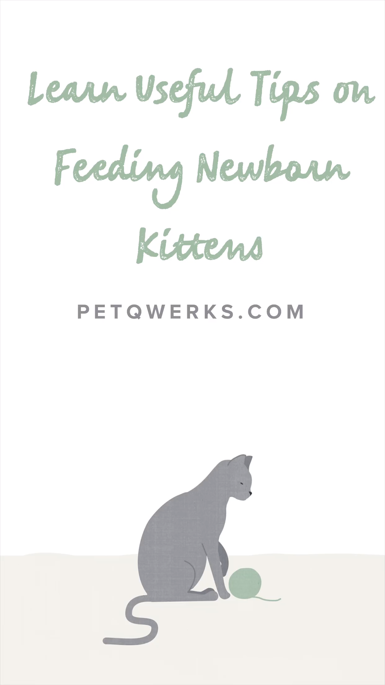 Learn Useful Tips on Feeding Newborn Kittens Pet Qwerks