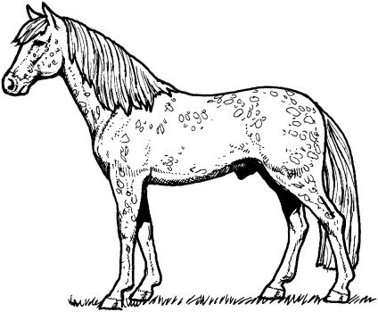 Appaloosa Horse Coloring Page Super Coloring Horse Coloring Books Horse Coloring Horse Coloring Pages