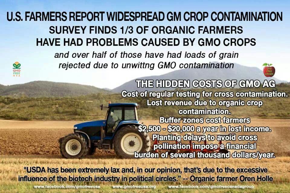 #GMO crops
