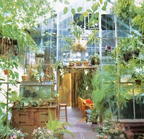 Decorating with Plants | Plants, Decorating and Green houses