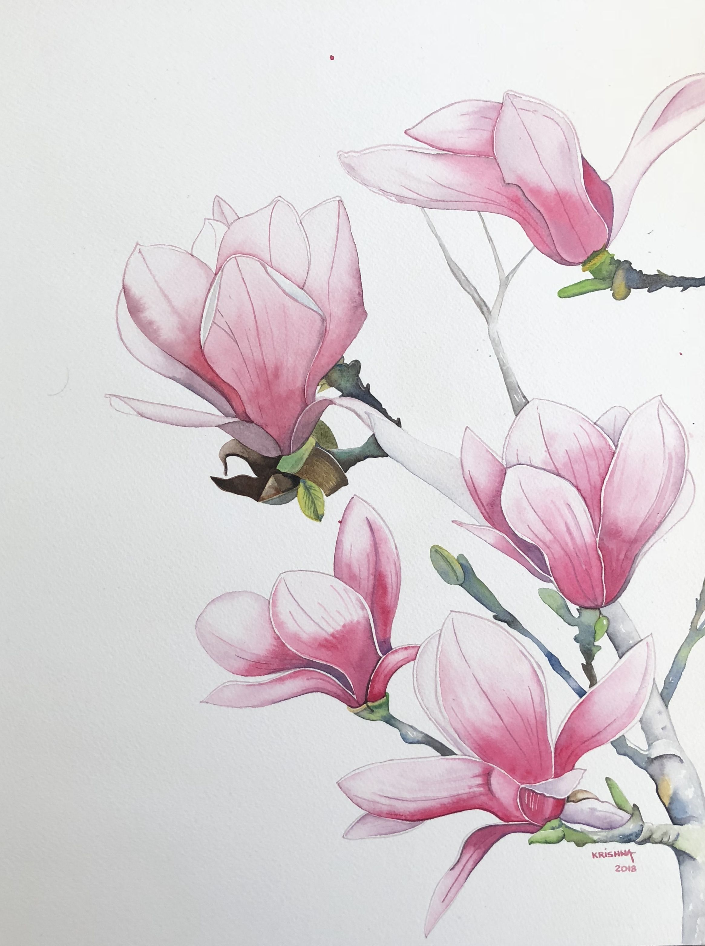 Magnolia Flower Sketches Flower Drawing Flower Art