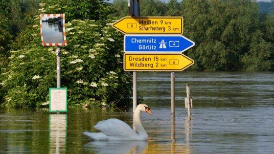 Überflutete Bundesstraße 6 in Gauernitz bei Meißen - beauty during devastation