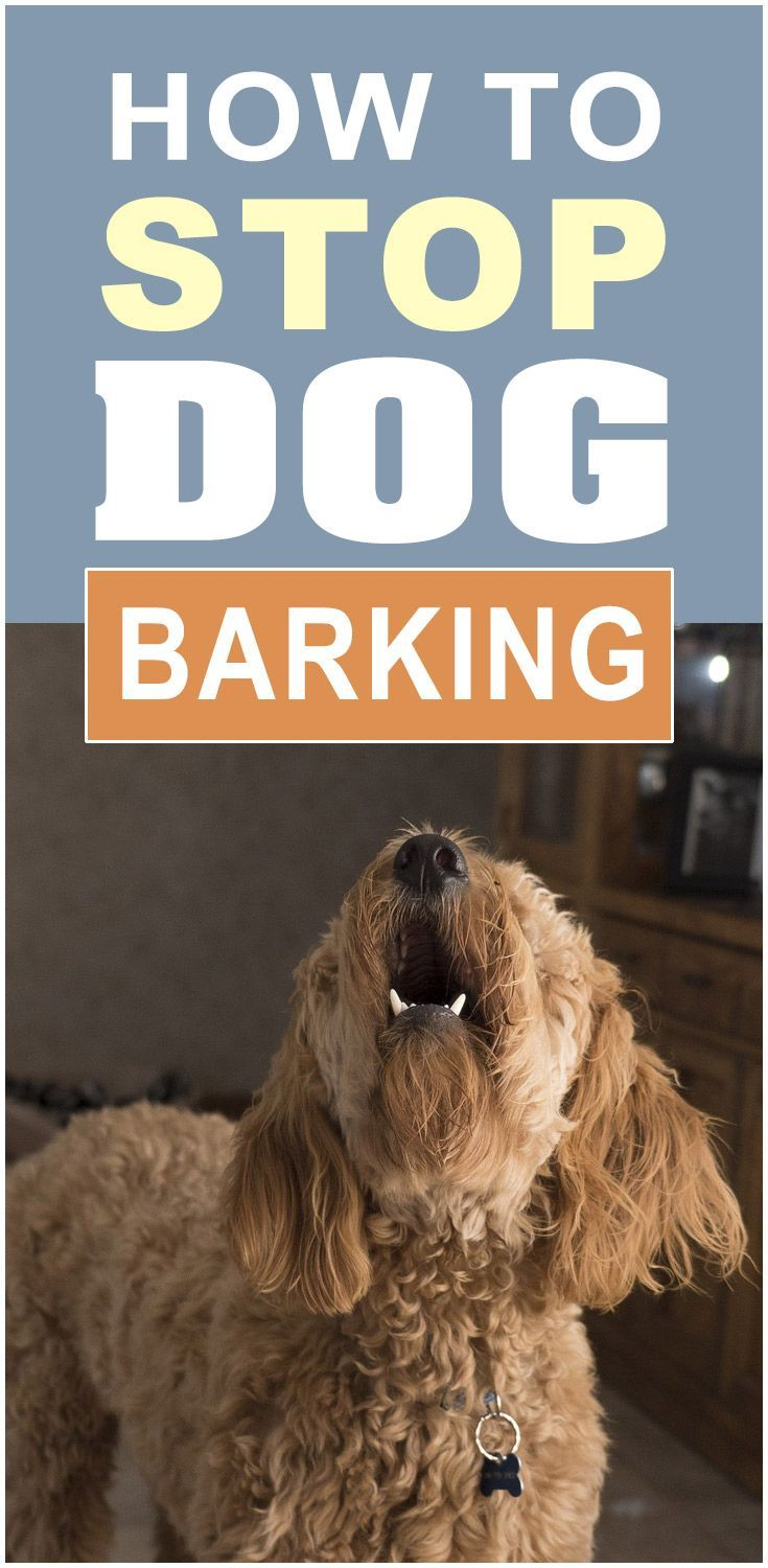 How to stop your dogs barking aggressive dog dog