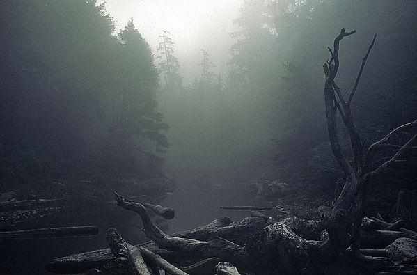 Landscape by Nikolaus Gruenwald
