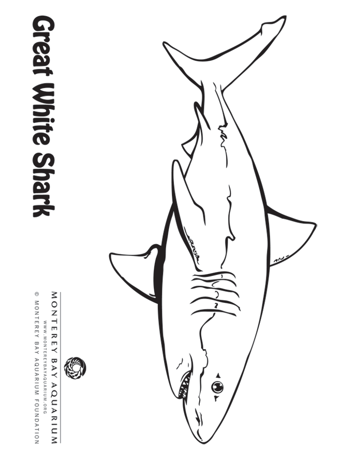White Shark Coloring Page From Monterey Bay Aquarium Shark Coloring Pages Coloring Pages Shark Art