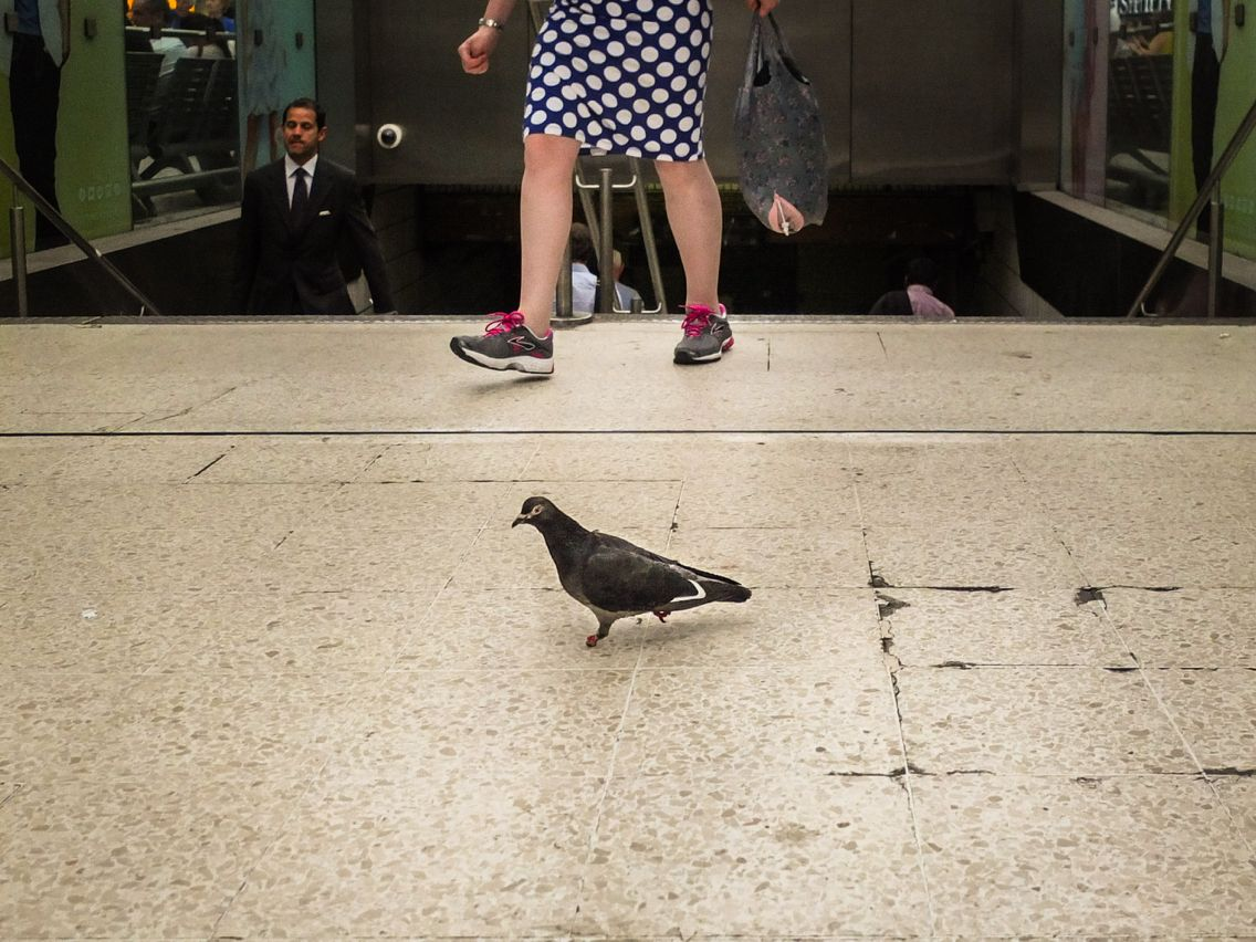 Day 114 - commuting pigeon