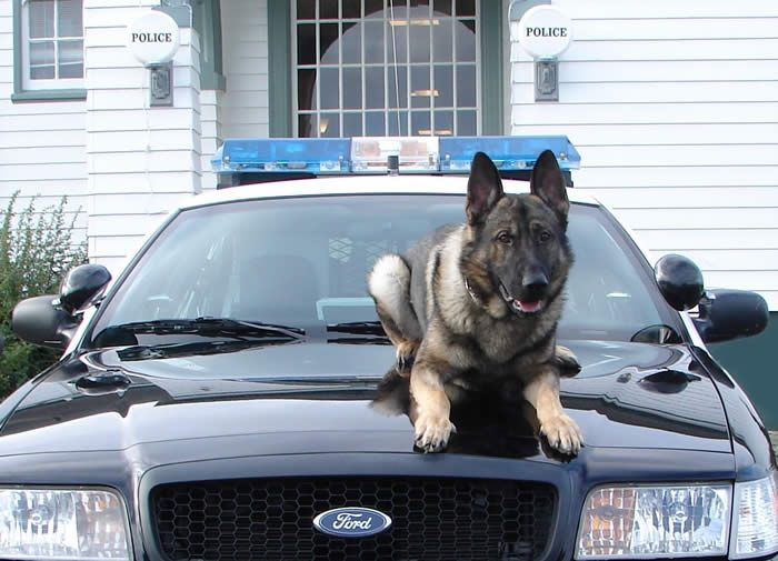 Police Can T Prolong Traffic Stops For Drug Dogs With Images