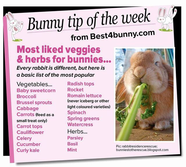 Pin By Marie Mago On Bunny Diet Bunny Care Bunny Rabbit Diet