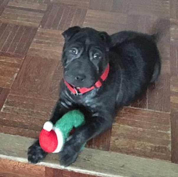 Houston TX Mixed Breed (Medium). Meet Constance a Pet
