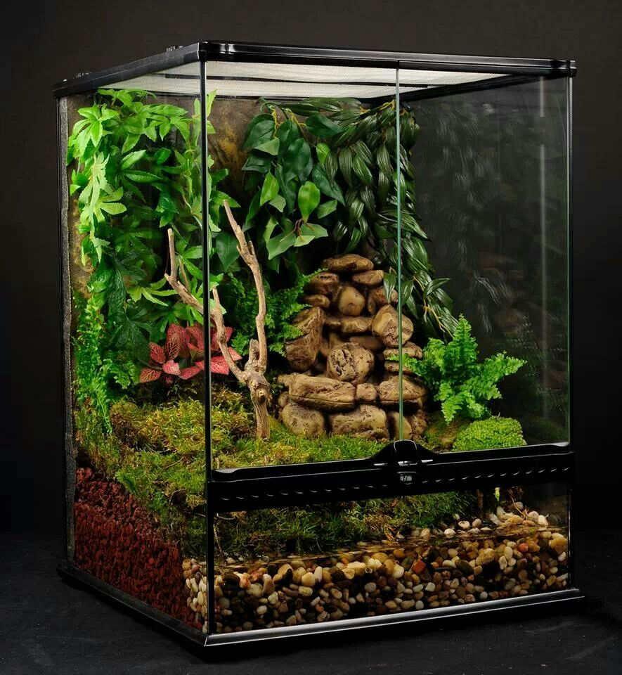 Perfect tree dart frog set up chamaleon pinterest for Terrario vertical