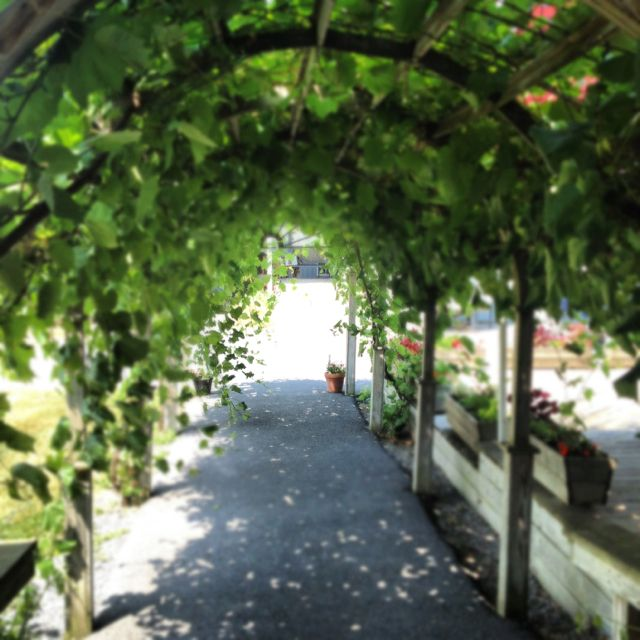 Kn Winery Finger Lakes One Of My Destination Wineries In Upstate Ny This