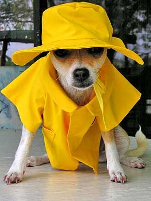 Yellow Rain Hat For Dogs
