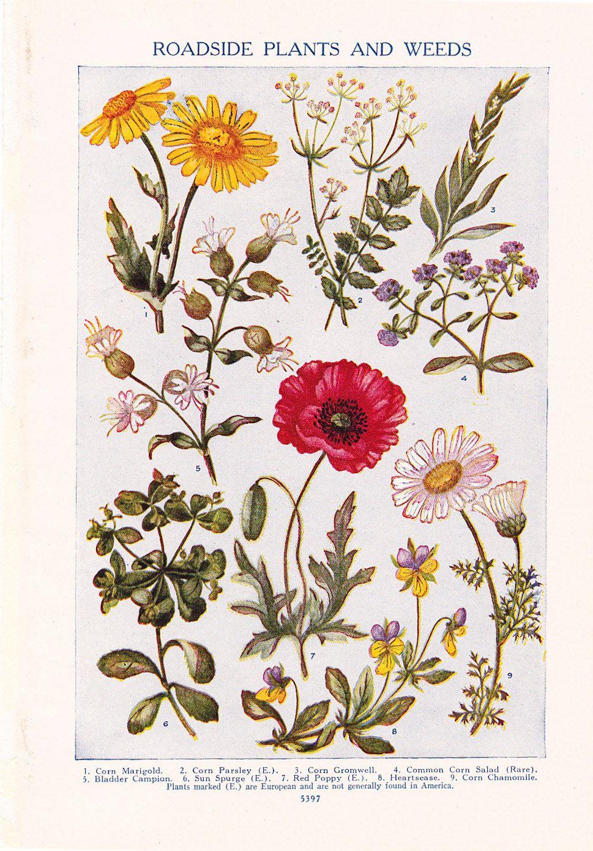 1947 Flower Print - Vintage Plant Home Decor Art Illustration for ...