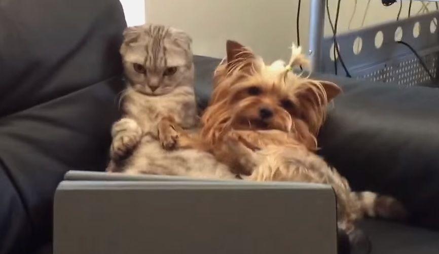 Смотреть кино собака и кот