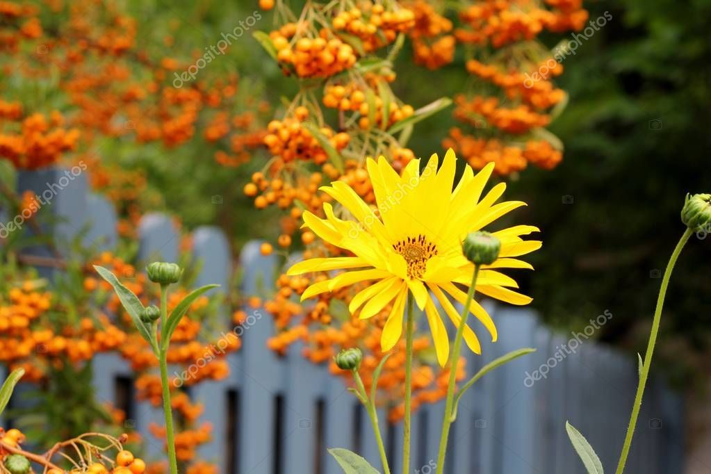 Autumn country flower walk - Stock Photo , #AFF, #flower, #country, #Autumn, #Photo #AD