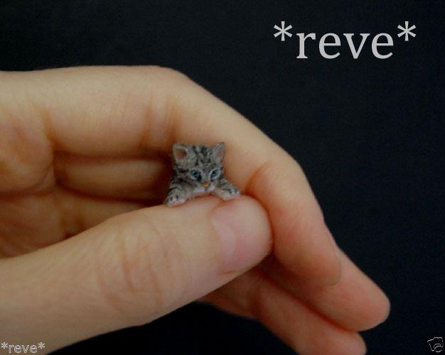 OOAK Realistic Handmade ~ Tabby Kitten ~ Dollhouse Miniature 1:12 Sculpture