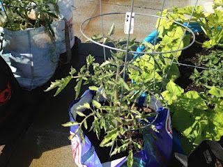 My little Garden Blog!