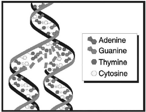 DNA cut and paste worksheet http://www.gov.mb.ca