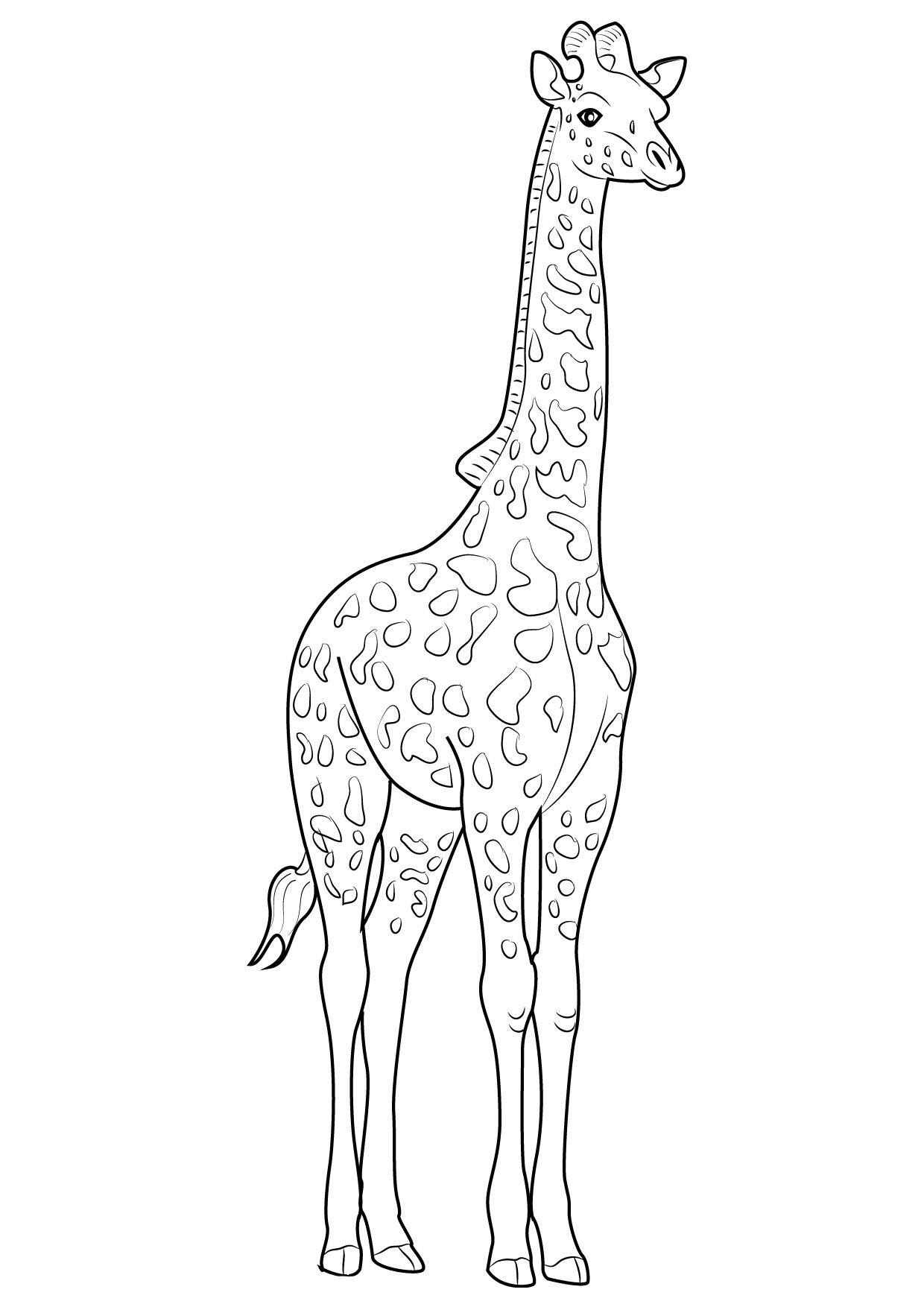 30 Disegni Di Giraffe Da Colorare Disegni Disegno Giraffa E