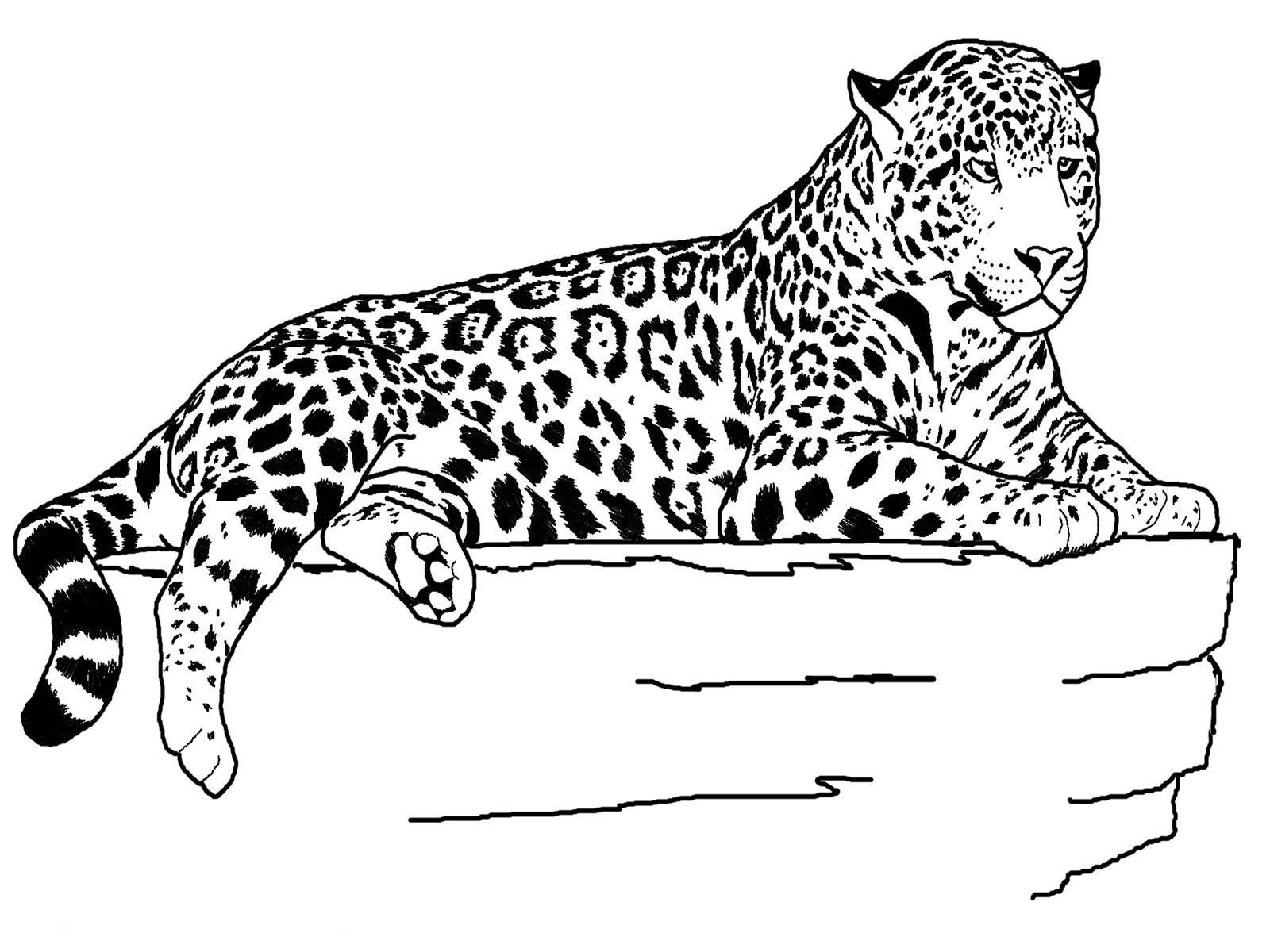 Printable Jaguar Coloring Pages Jaguar Coloring Pages Ikids Ideias Para Desenho Animais Ideias Para Pintura