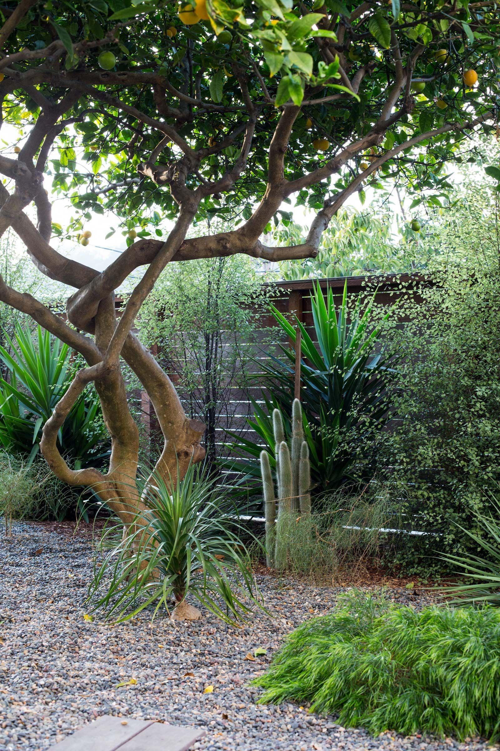 Designer Profile Talc Studio Pocket Garden Front Yard Garden