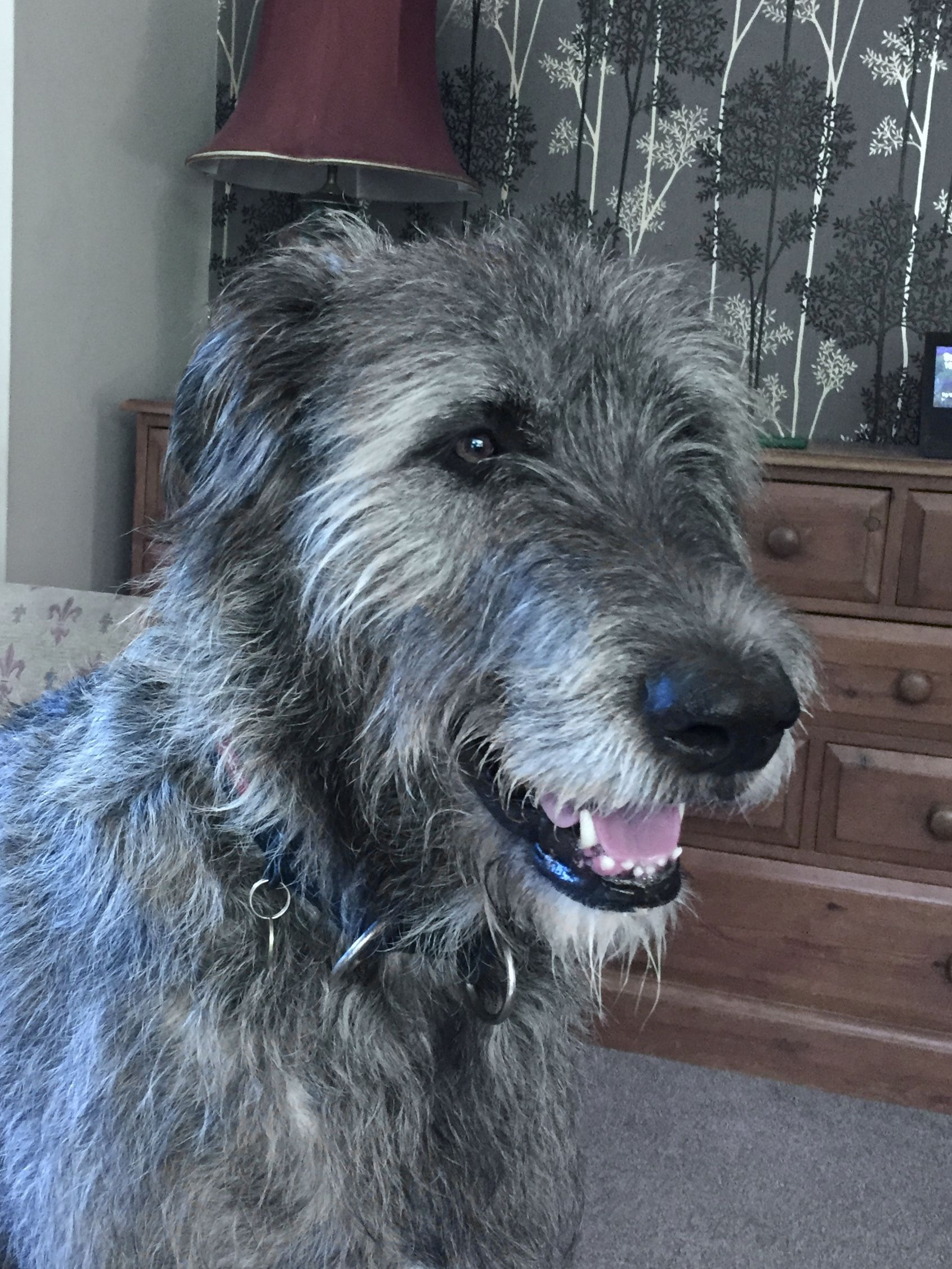 Pin On Wolfhounds