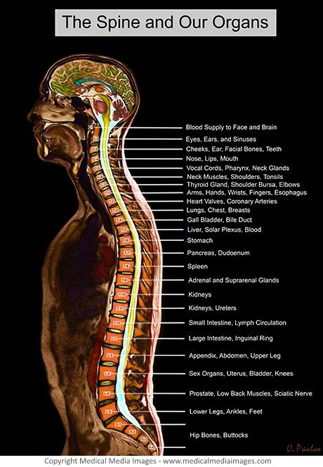 pin by sheila maingi on health and wellness | spine health ... mri spine diagram spine diagram neck #12