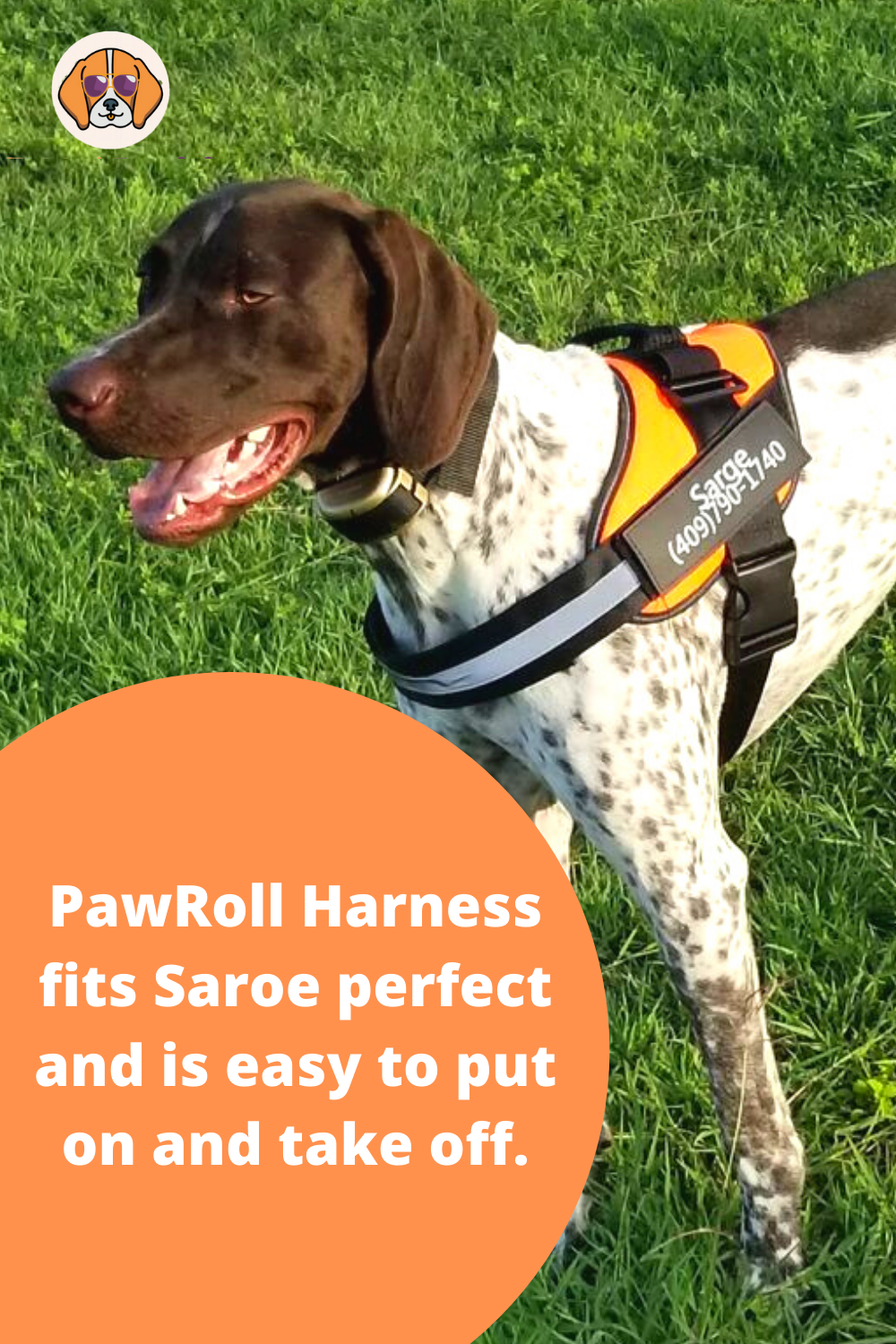 Personalized Pawroll No Pull Dog Harness With Handle In 2020 Dog Harness Dogs Dog Person