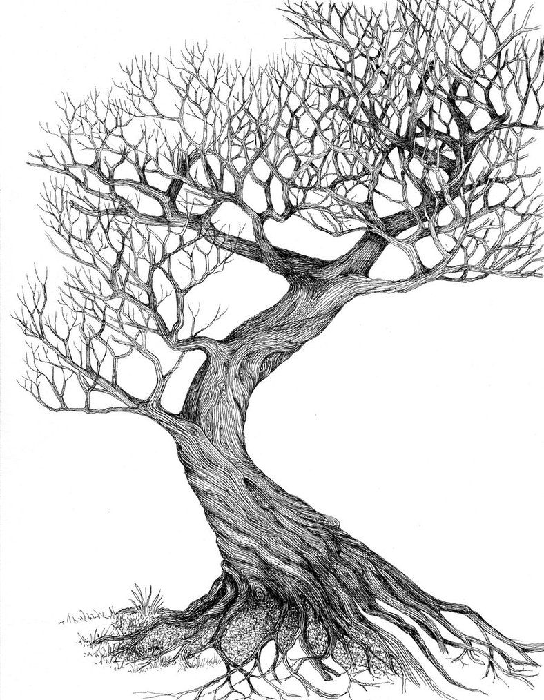 Tree Line Art Design : Line drawing leaves twisting tree by ellfi on