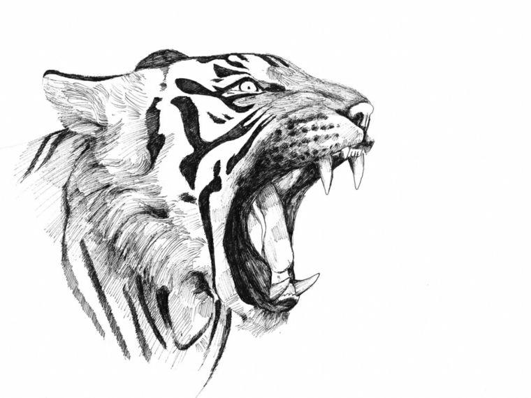 Disegni A Matita Volto Tigre Ruggisce Mostrando Denti Aguzzi