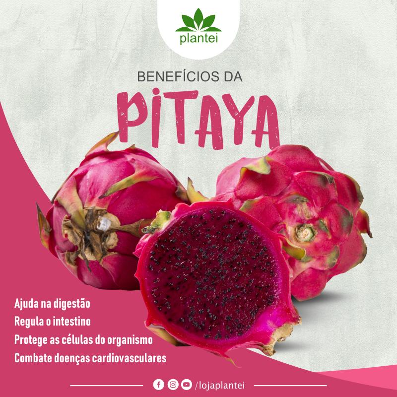 pitaya rosa informação nutricional