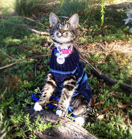 Meet The Adorable Blind Kitten Who Loves Going On Adventures With Her Mom With Images Kittens Adventure Cat Love Is Gone