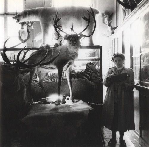 Graciela Iturbide, Rue De Bac, Paris, France, 1995