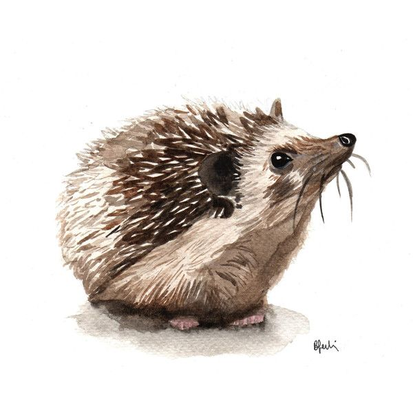 A5 Hedgehog Watercolour Print Original Handmade Art Print 79 Dkk Liked On Polyvore Featuring Home Home Decor Hedgehog Art Goat Art Hedgehog Illustration