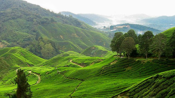 Cameron Highlands, Malaysia (Stay on a Tea Plantation)