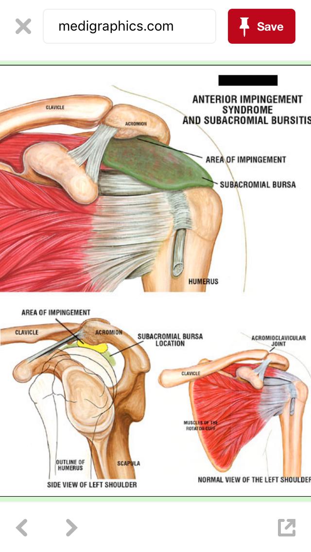 Pin by Stevche Spasenoski on ortopedija | Pinterest | Anatomy ...