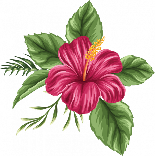 Picture 124453 Bush Png Watercolor Flower Drawing Flower Art Flower Painting