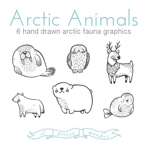 Cute Doodly Hand Drawn Arctic Animal Clipart Illustrations Etsy In 2021 How To Draw Hands Arctic Animals Animal Clipart