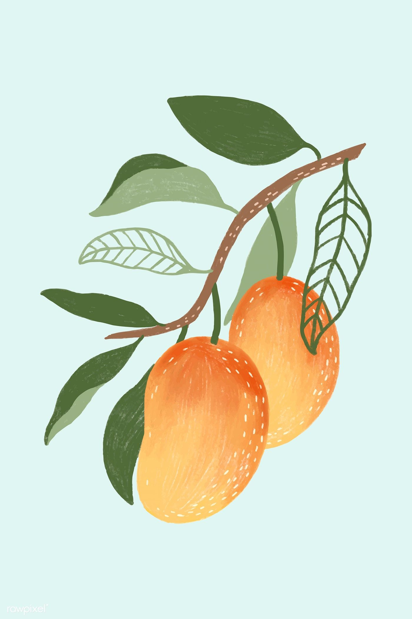 Download premium illustration of Hand drawn mango design