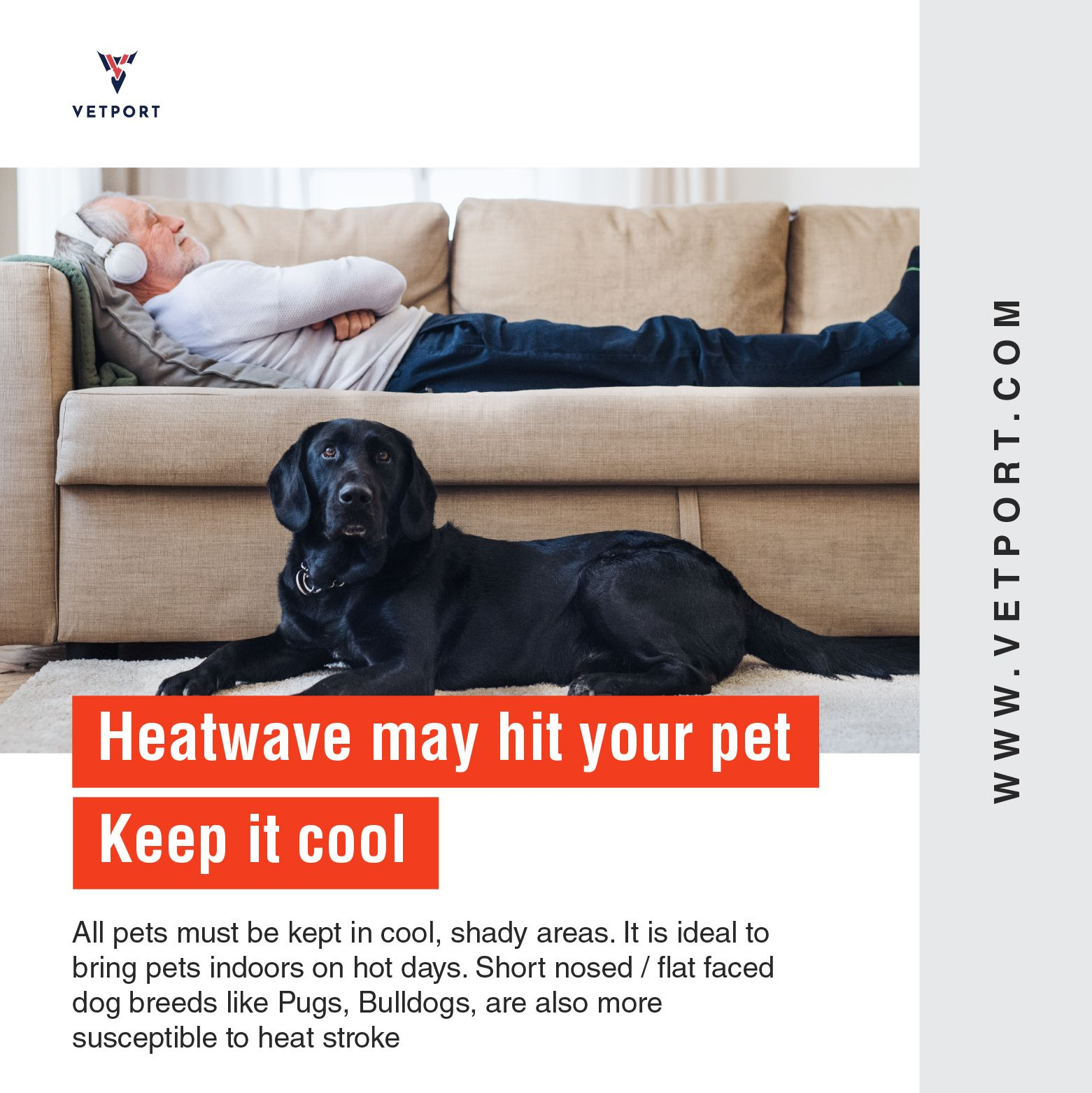 Heatwave May Hit Your Pet Keep It Cool Fridayfeeling Fridaythoughts Pets Vetport Veterinarian Veterinary Petcare Your Pet Flat Faced Dogs Dog Face