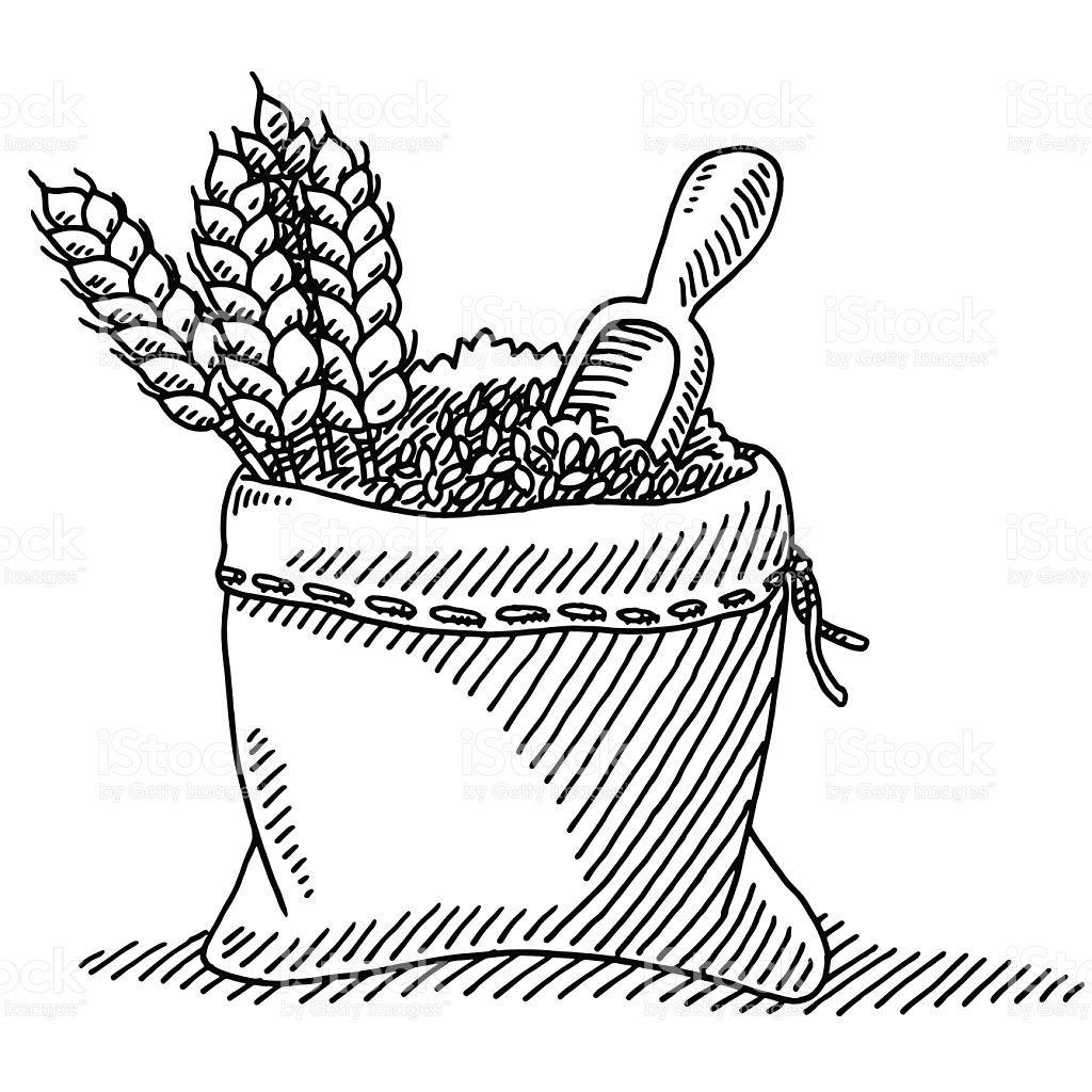 Granos De Trigo Planta Saco De Dibujo Illustracion Libre De Derechos Libre De Derechos Espiga De Trigo Trigo Saco De Grano