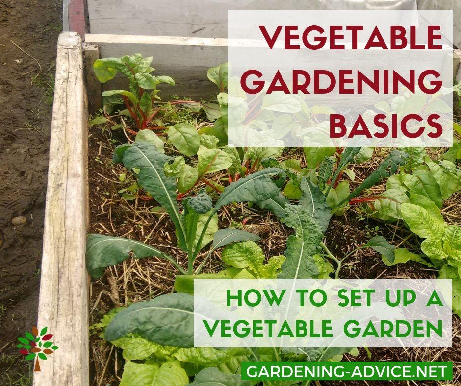 Urban Vegetable Gardening For Beginners: Organic Vegetable Gardening Basics For Beginners